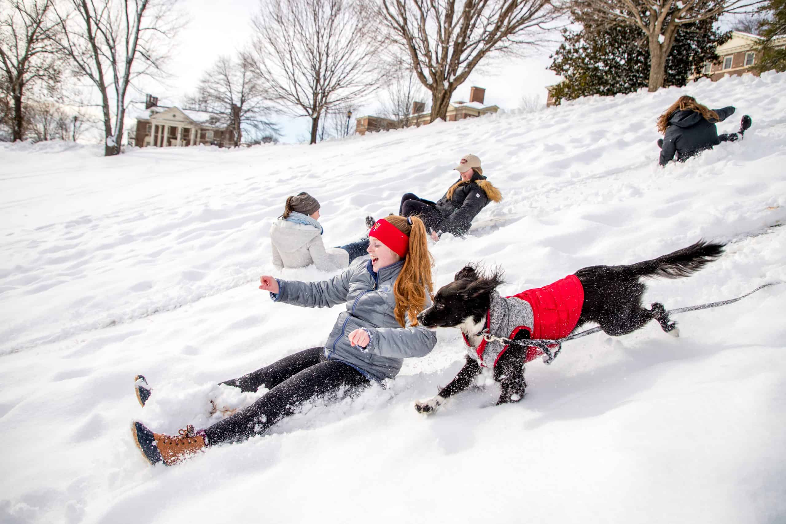 Female student sledding down hill with black dog wearing a red sweater running beside her