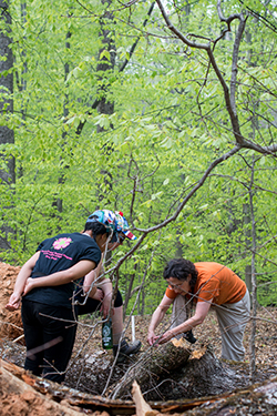Professor Linda Fink stops to show Brea Marshall '17 how creatures of the forest use the habitat created by fallen trees.