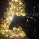 Christmas Tree Lighting 2015. Photo by Kollin Kirven '18