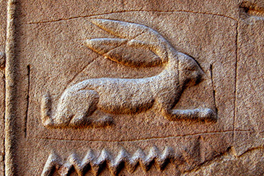 """In Middle Egyptian, a hieroglyph depicting a hare with two squiggles represents the verb """"to be."""" Using English letters, it is expressed as """"wnn."""" No vowel sounds are preserved in Middle Egyptian script. Photo: """"Nice hare"""" by Karen Green (flickr.com/photos/klg19), licensed under CC BY-SA 2.0."""