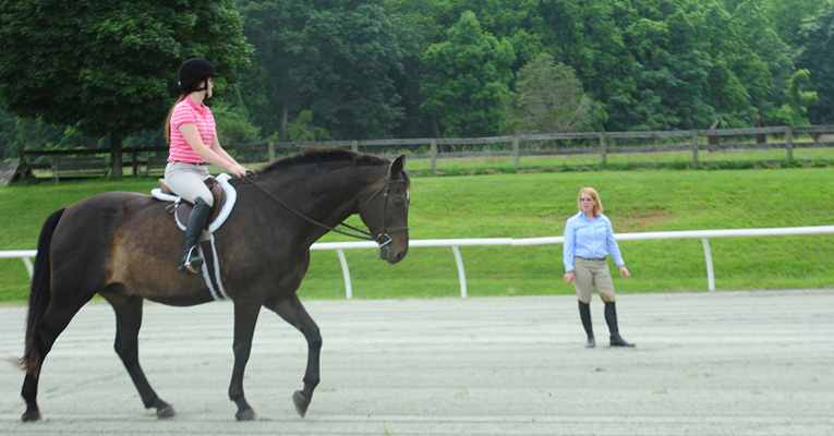 20 Most Amazing College Equestrian Centers Best Value