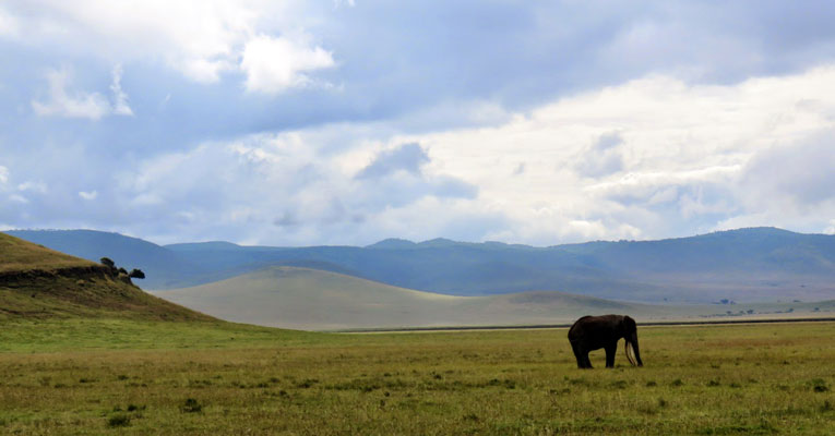 Sweet Briar College senior Savanna Klein photographed lots of wildlife during her semester-long stay in Tanzania — such as this elephant in the Ngorongoro Conservation Area.