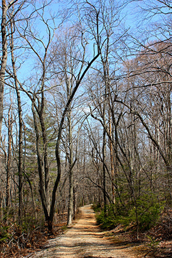 18 miles of trails provide plenty of room for running and walking Sweet Briar's campus.